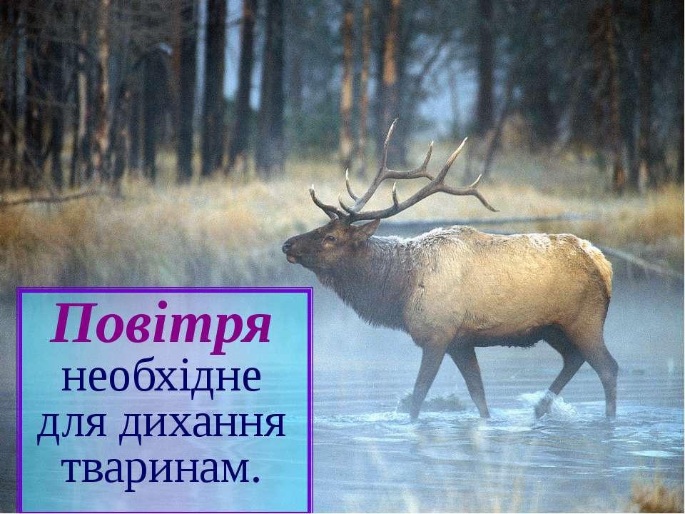 Повітря необхідне для дихання тваринам.