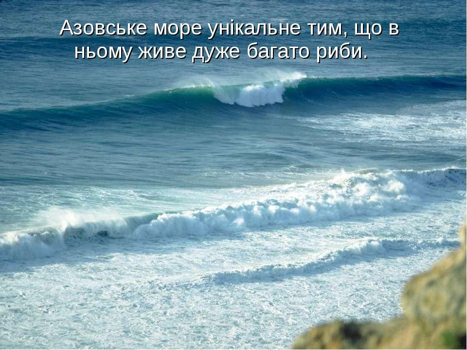 Азовське море унікальне тим, що в ньому живе дуже багато риби.