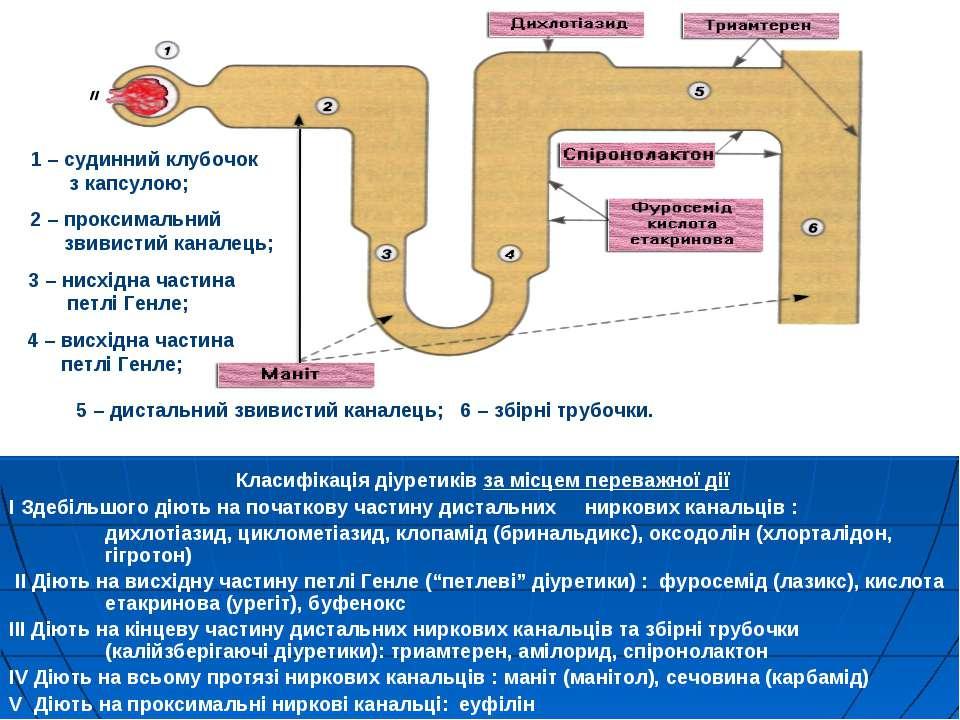 Класифікація діуретиків за місцем переважної дії I Здебільшого діють на почат...