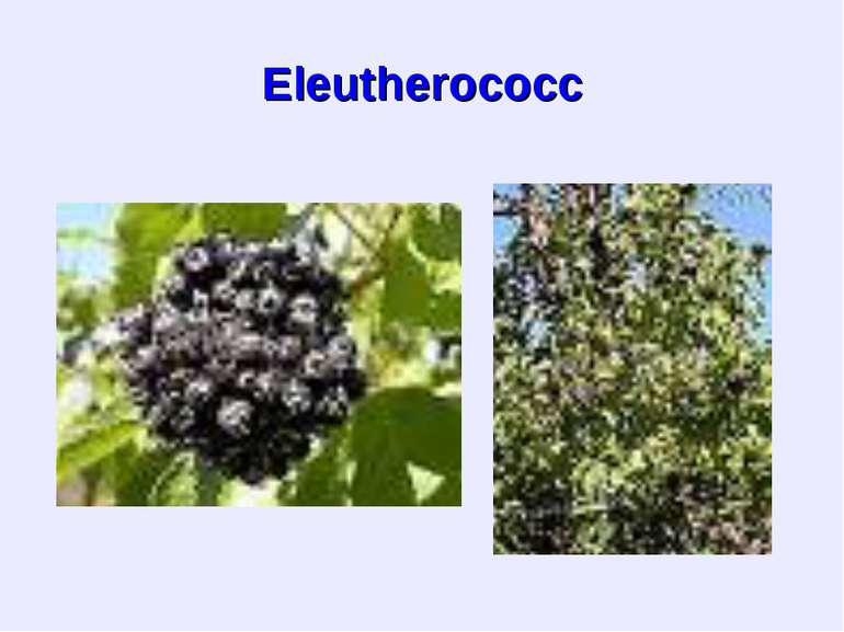 Eleutherococc