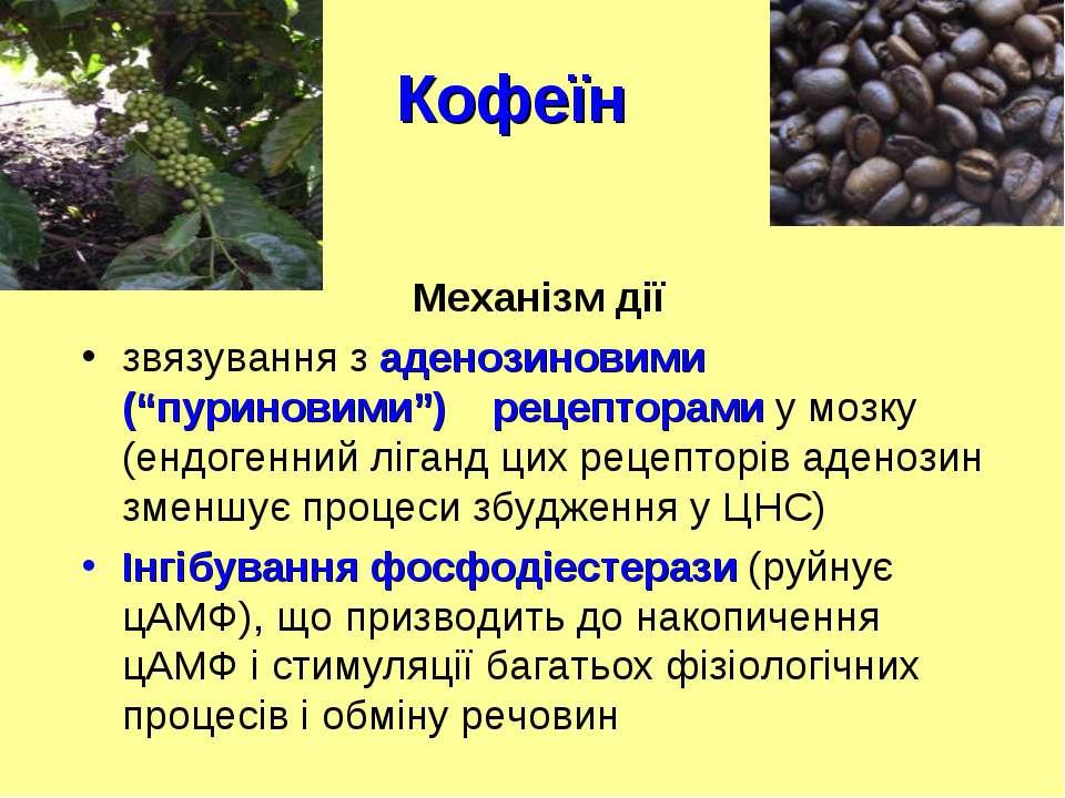 """Кофеїн Механізм дії звязування з аденозиновими (""""пуриновими"""") рецепторами у м..."""