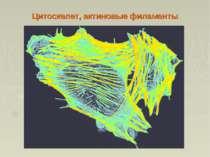 Цитоскелет, актиновые филаменты