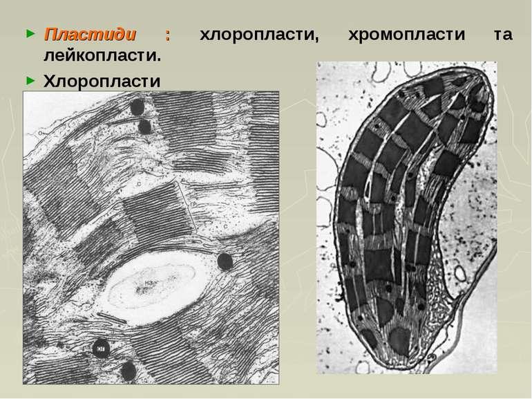 Пластиди : хлоропласти, хромопласти та лейкопласти. Хлоропласти