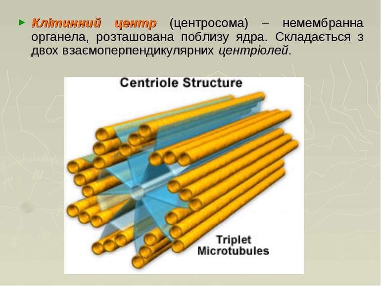 Клітинний центр (центросома) – немембранна органела, розташована поблизу ядра...