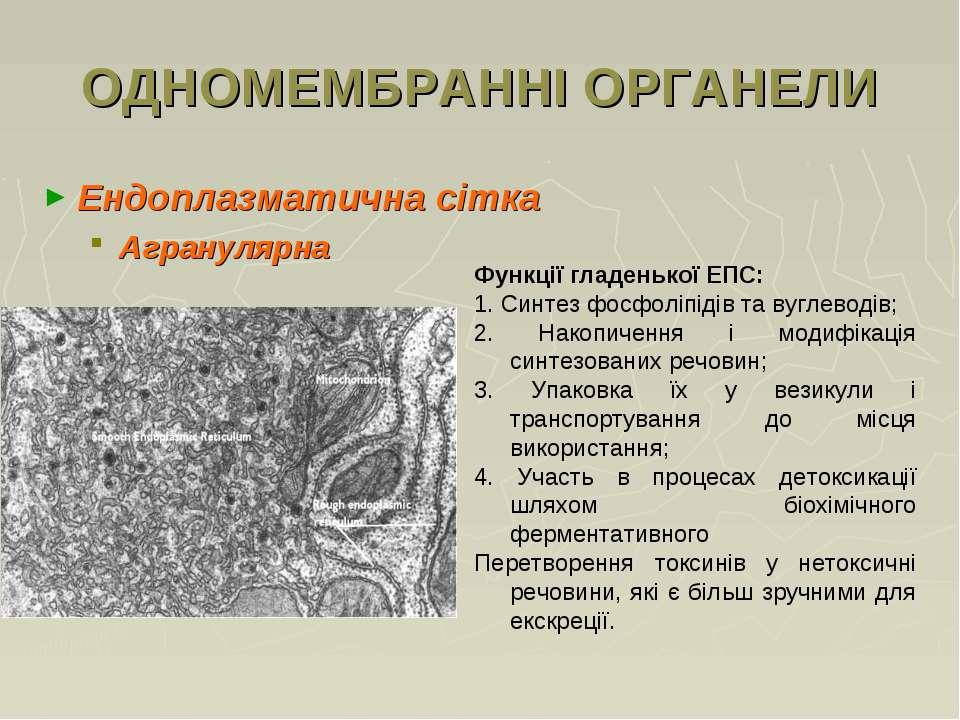 ОДНОМЕМБРАННІ ОРГАНЕЛИ Ендоплазматична сітка Агранулярна Функції гладенької Е...