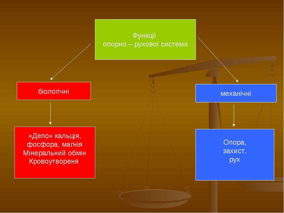 Функції опорно – рухової системи біологічні механічні «Депо» кальція, фосфора...