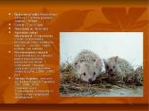 Їжа к вуха тий(Hemiechinus auritus)— ссавець родини їжакові. -300грн. Стату...