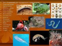 Том «Тваринний світ» складається з таких розділів: Гідроїдні поліпи; Круглі ч...