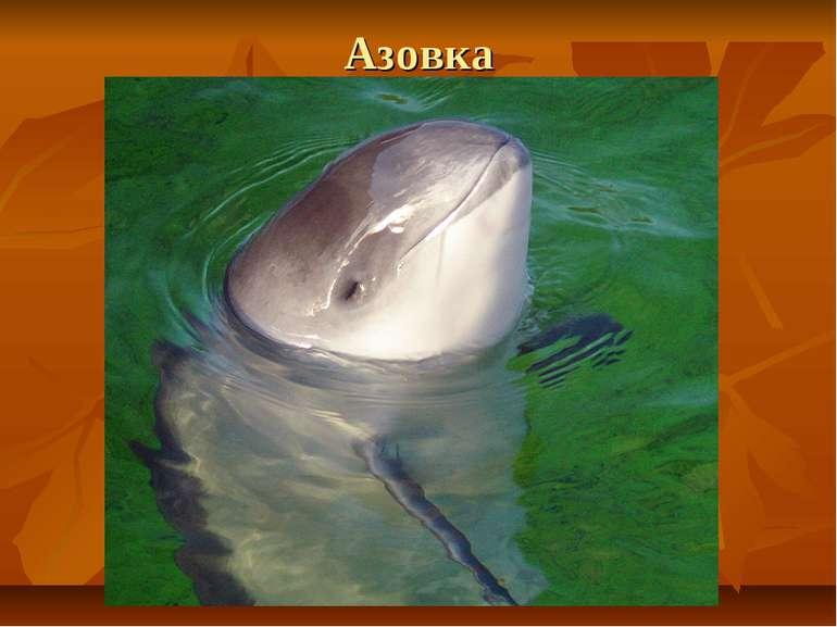 Азовка