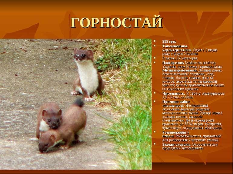 ГОРНОСТАЙ 255 грн. Таксономічна характеристика.Один з 2 видів роду у фауні У...
