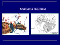 Клітинна оболонка