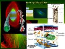 Немембранні органели: цитоскелет ТДМУ