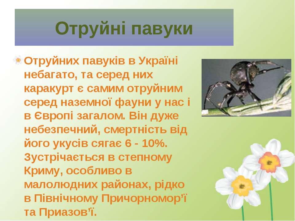 Отруйних павуків в Україні небагато, та серед них каракурт є самим отруйним с...