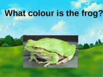 What colour is the frog?