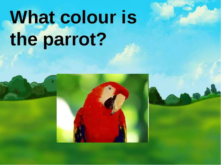 What colour is the parrot?