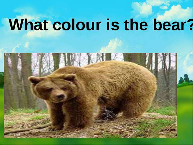 What colour is the bear?