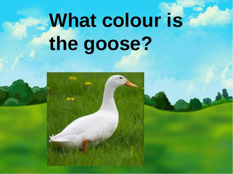 What colour is the goose?