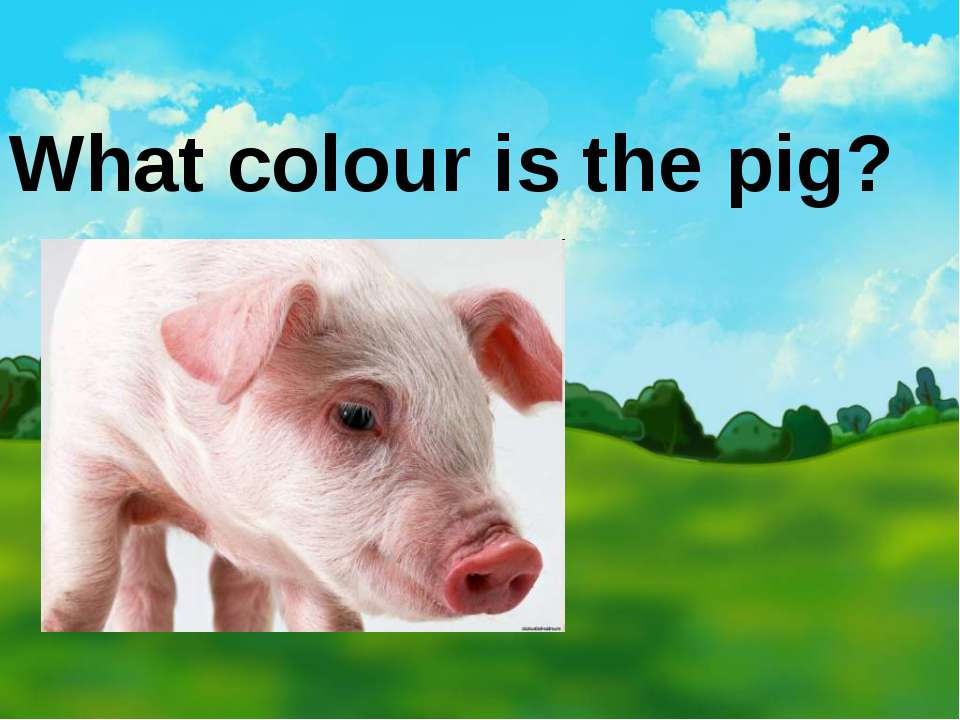 What colour is the pig?