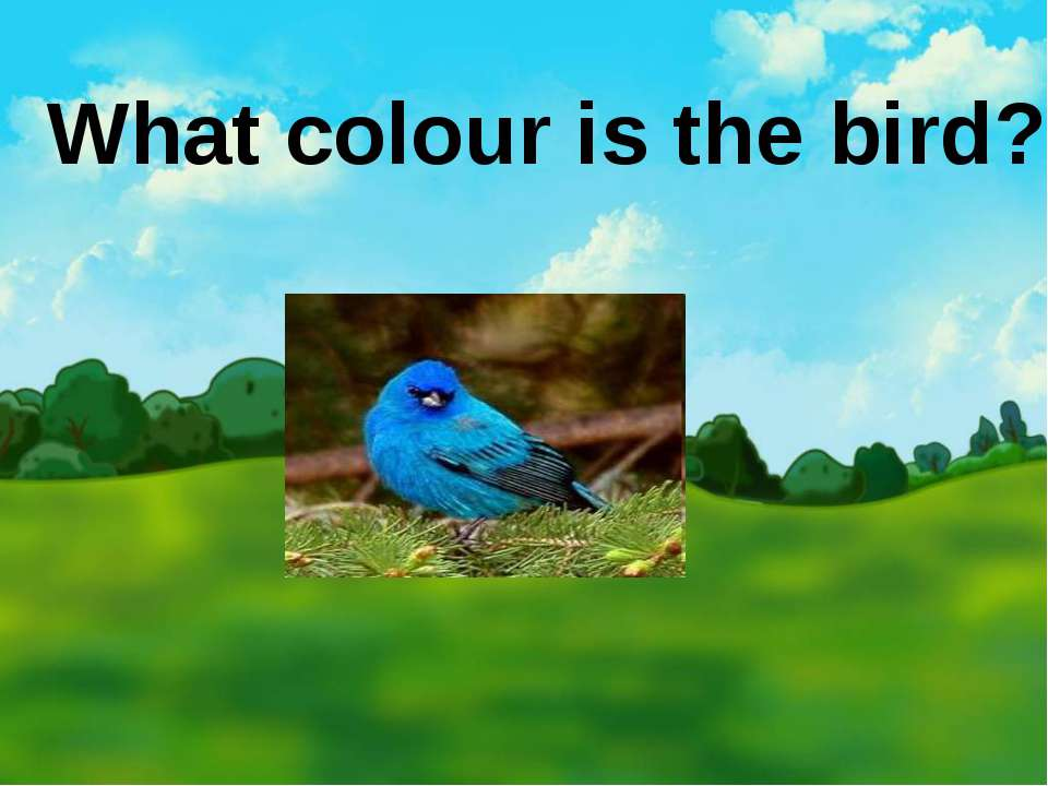 What colour is the bird?