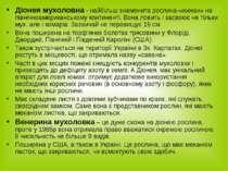 Діонея мухоловна - найбільш знаменита рослина-«хижак» на північноамерикансько...