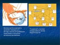 Поширений у природі координований вплив мікроелементів Велика частина металів...