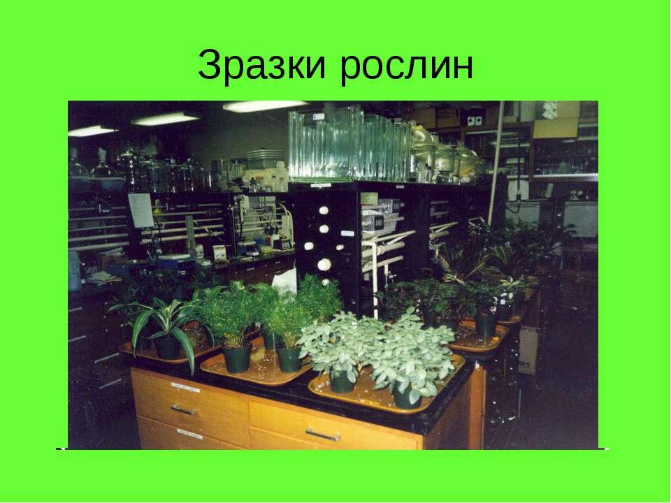 Зразки рослин