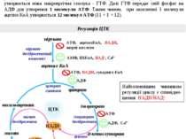 Регуляція ЦТК Енергетичний баланс ЦТК У ЦТК при окисненні однієї молекули «ак...
