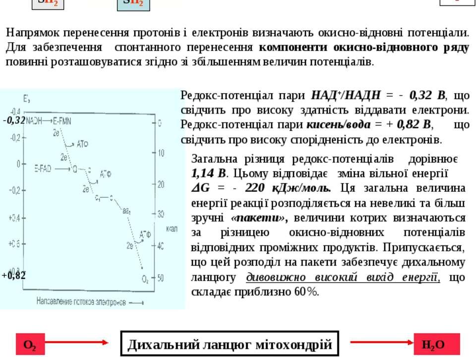 Редокс-потенціал пари НАД+/НАДН = - 0,32 В, що свідчить про високу здатність ...
