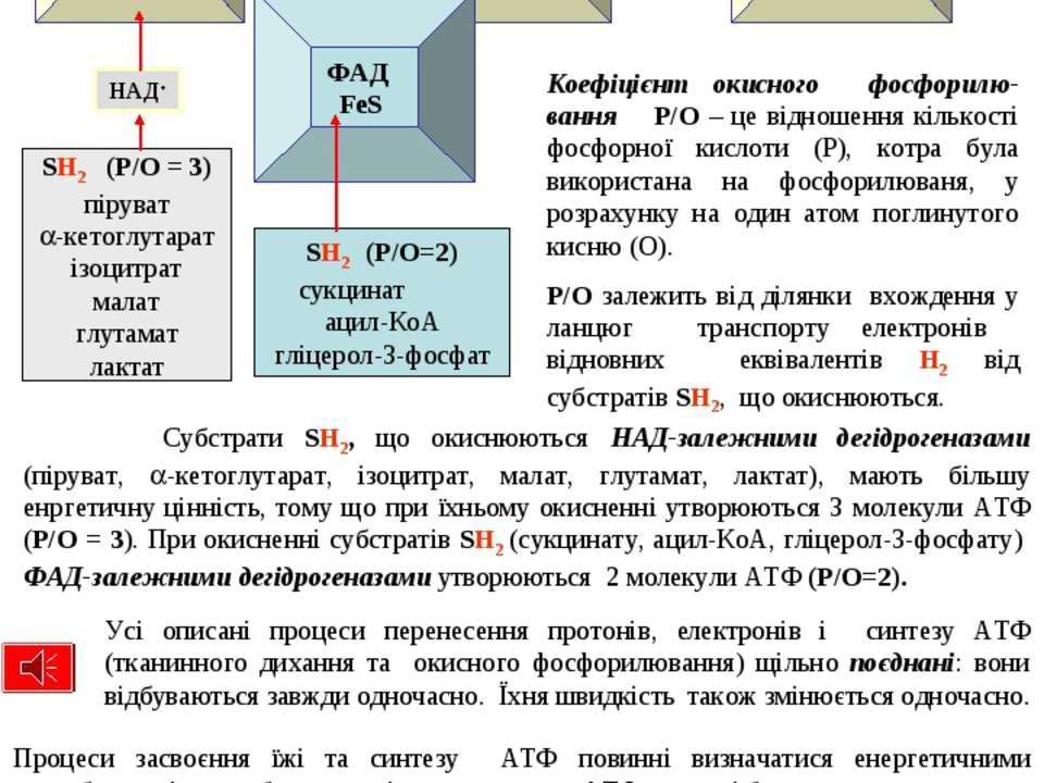 Субстрати SH2, що окиснюються НАД-залежними дегідрогеназами (піруват, -кетогл...