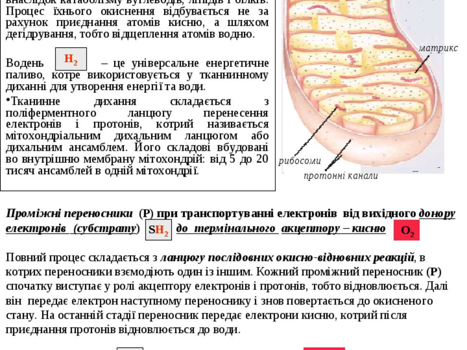 Біологічне окиснення Біологічне окиснення, що супроводжується споживанням кис...