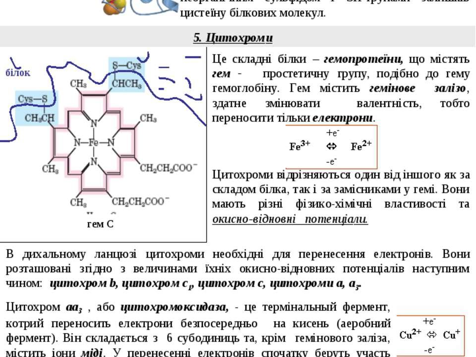 4. Залізо-сірчані білки (FeS – білки) Це складні білки, котрі містять негемін...