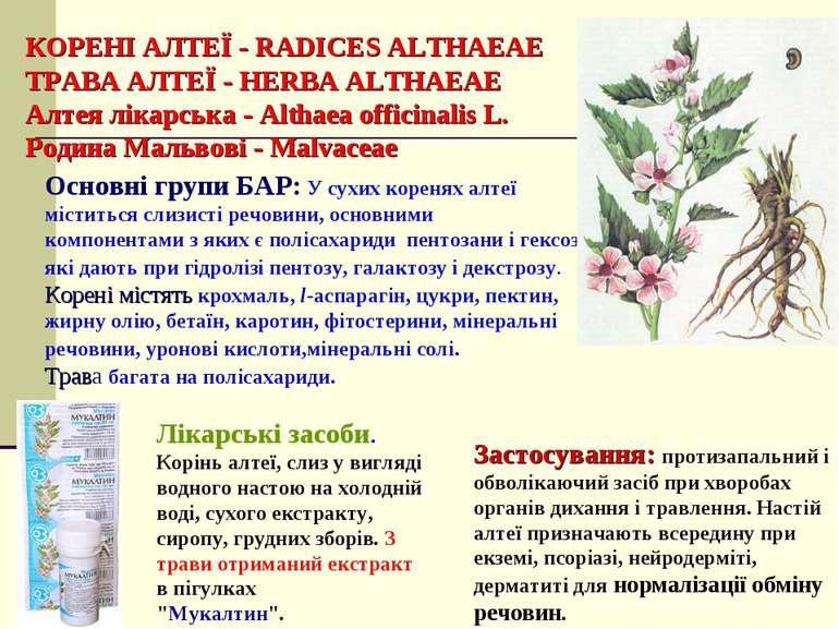КОРЕНІ АЛТЕЇ - RADICES ALTHAEAE ТРАВА АЛТЕЇ - HERBA ALTHAEAE Алтея лікарська ...