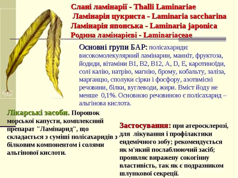 Слані ламінарії - Thalli Laminariae Ламінарія цукриста - Laminaria saccharina...