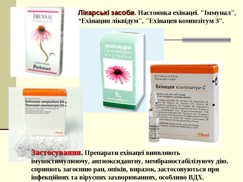 Застосування. Препарати ехінацеї виявляють імуностимулюючу, антиоксидантну, м...