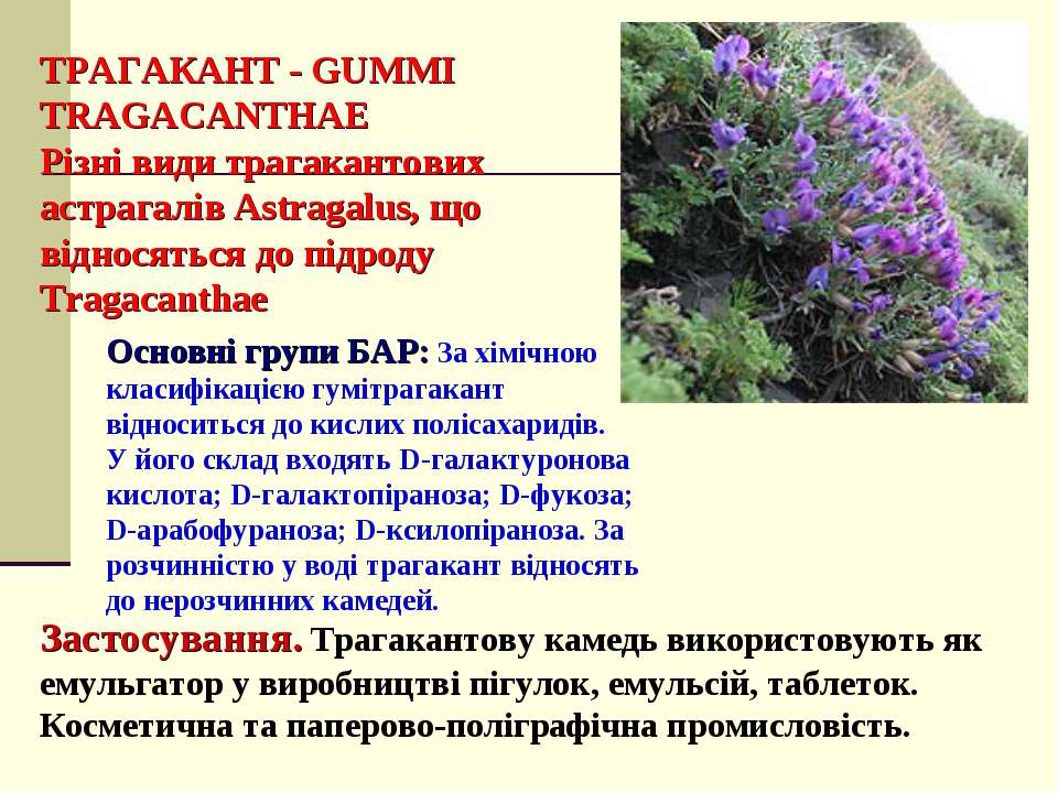 ТРАГАКАНТ - GUMMI TRAGACANTHAE Різні види трагакантових астрагалів Astragalus...