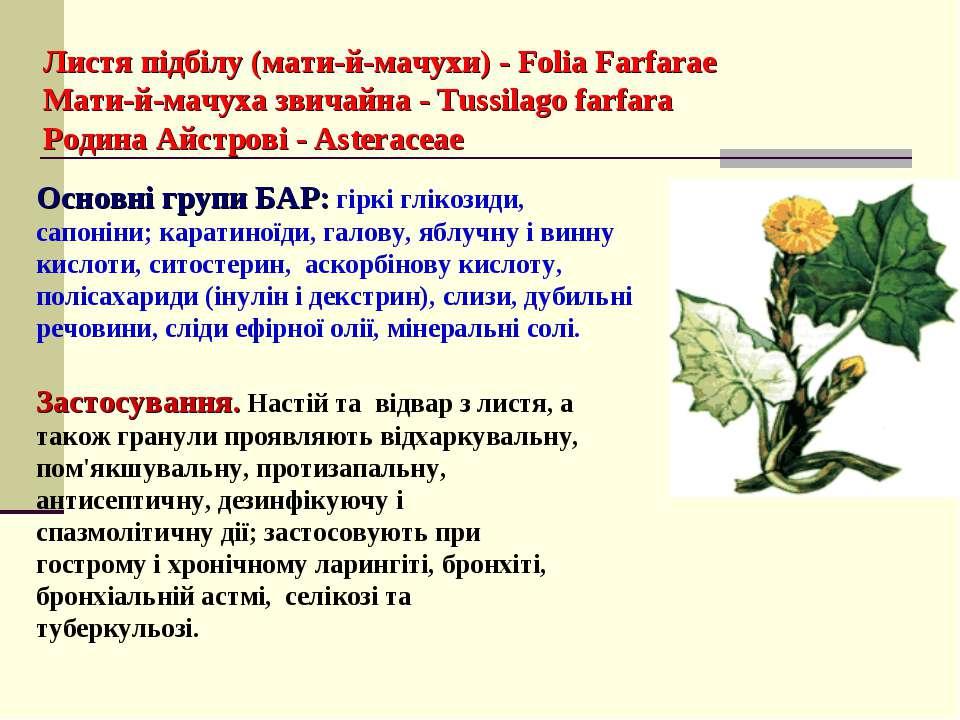 Листя підбілу (мати-й-мачухи) - Folia Farfarae Мати-й-мачуха звичайна - Tussi...