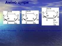 Аміно цукри  -D-Глюкозамін -D-Галактозамін N-Ацетил -D-глюкозамін