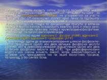 Нуклеїнові кислоти являють собою продукти полімеризації моно-нуклеотидів. Нук...