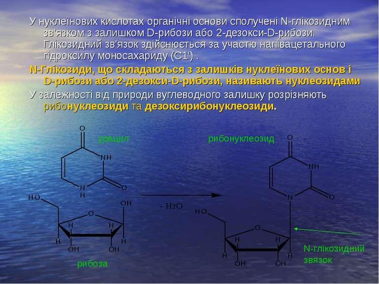 У нуклеїнових кислотах органічні основи сполучені N-глікозидним зв'язком з за...