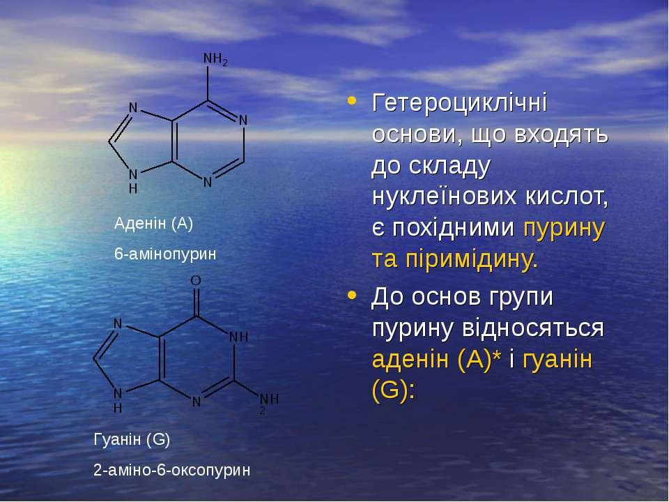 Гетероциклічні основи, що входять до складу нуклеїнових кислот, є похідними п...