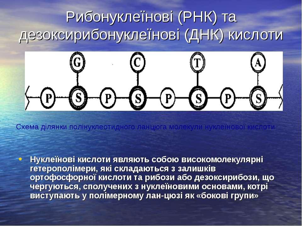 Рибонуклеїнові (РНК) та дезоксирибонуклеїнові (ДНК) кислоти Нуклеїнові кислот...