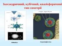 Ікосаедричний, кубічний, квазісферичний тип симетрії Adenovirus Herpes simple...