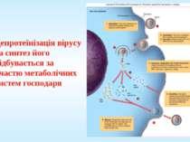 Депротеїнізація вірусу та синтез його відбувається за участю метаболічних сис...