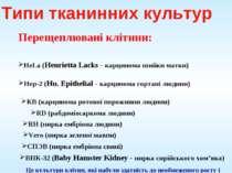 Перещеплювані клітини: HeLa (Henrietta Lacks - карцинома шийки матки) Hep-2 (...