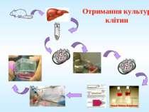 Отримання культур клітин