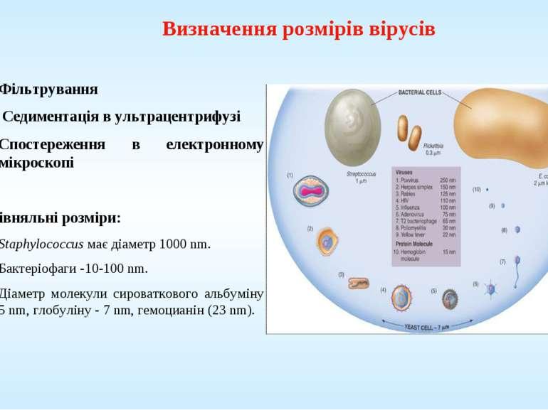 Визначення розмірів вірусів Фільтрування Седиментація в ультрацентрифузі Спос...