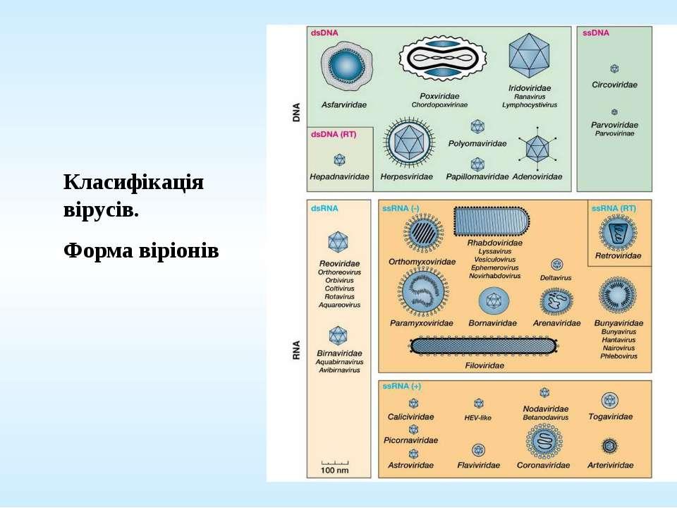 Класифікація вірусів. Форма віріонів