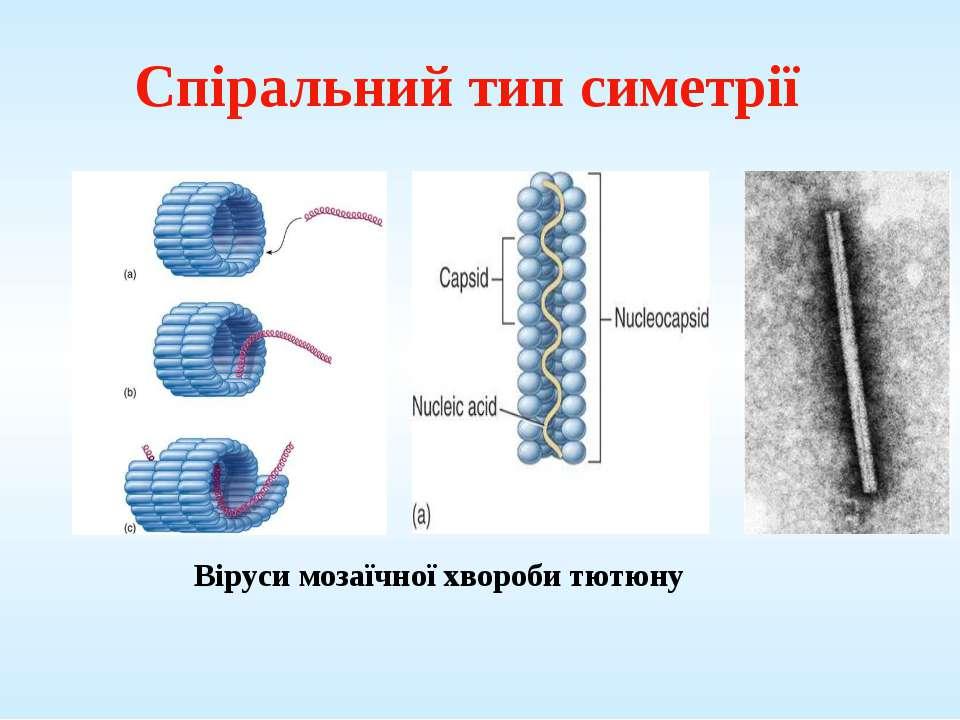 Спіральний тип симетрії Віруси мозаїчної хвороби тютюну