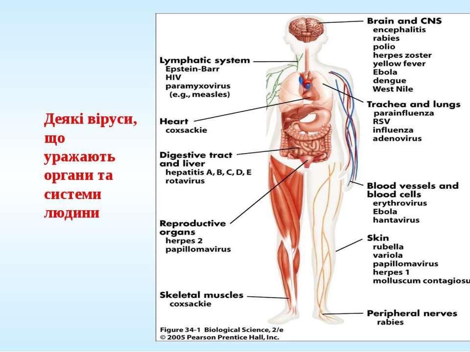 Деякі віруси, що уражають органи та системи людини