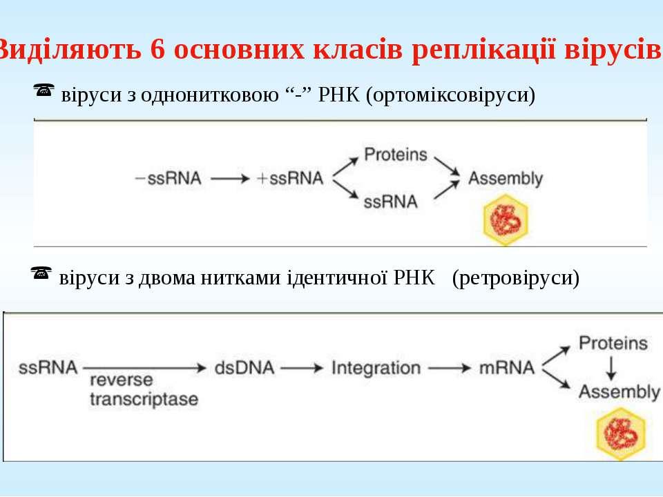 Виділяють 6 основних класів реплікації вірусів: віруси з двома нитками іденти...